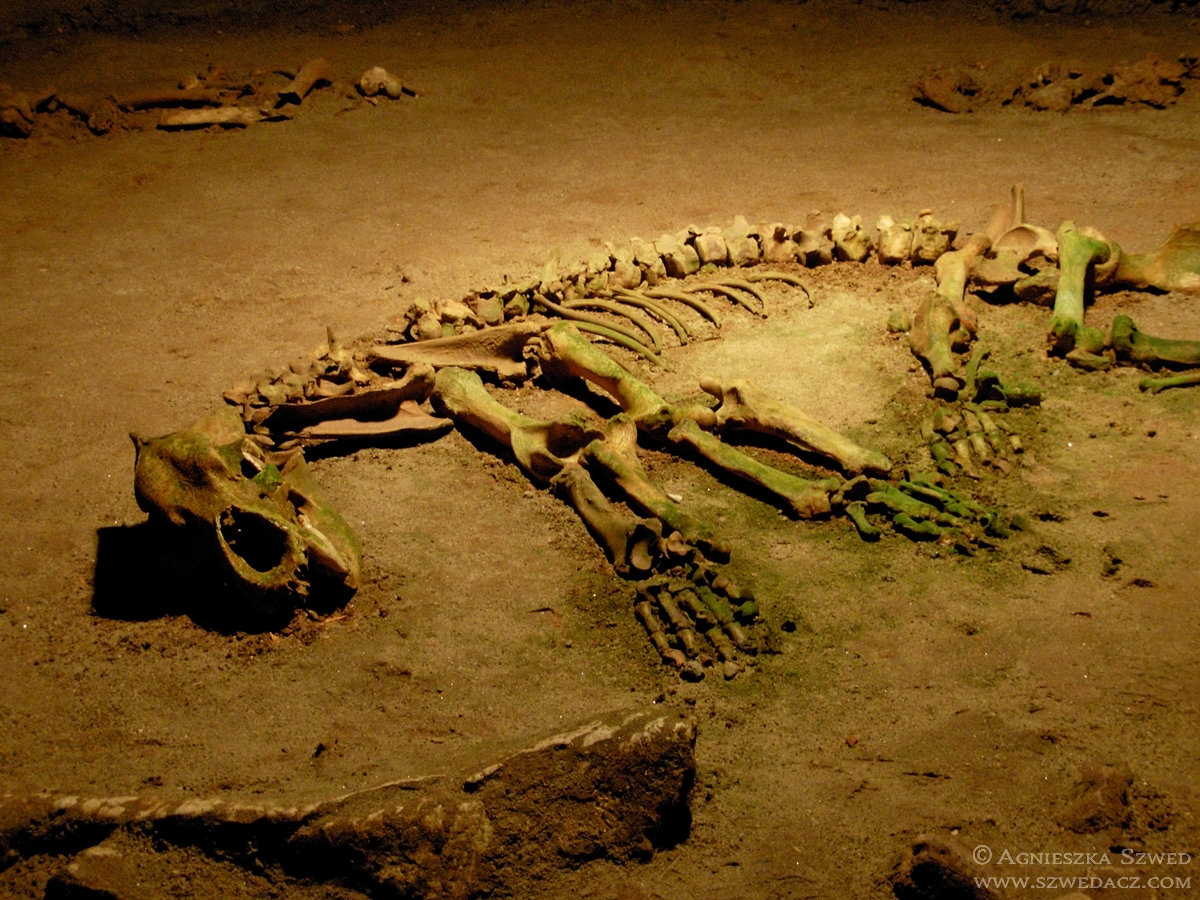Jaskinia Niedźwiedzia – z wizytą u przypadkowych kanibali