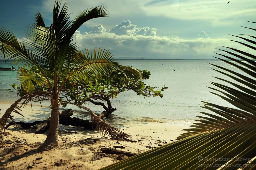 szwedacz-panama-isla-iguana29