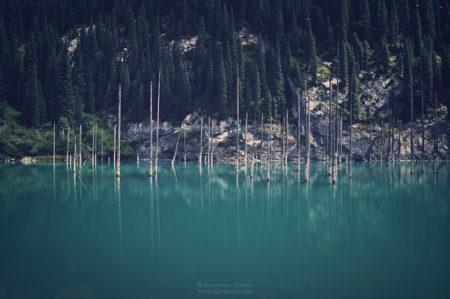 Kaindy – zatopiony las w Kazachstanie