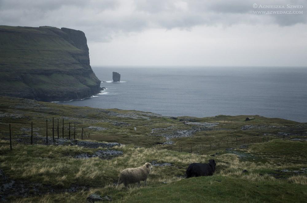 Wiedźma iolbrzym, wyspy owcze
