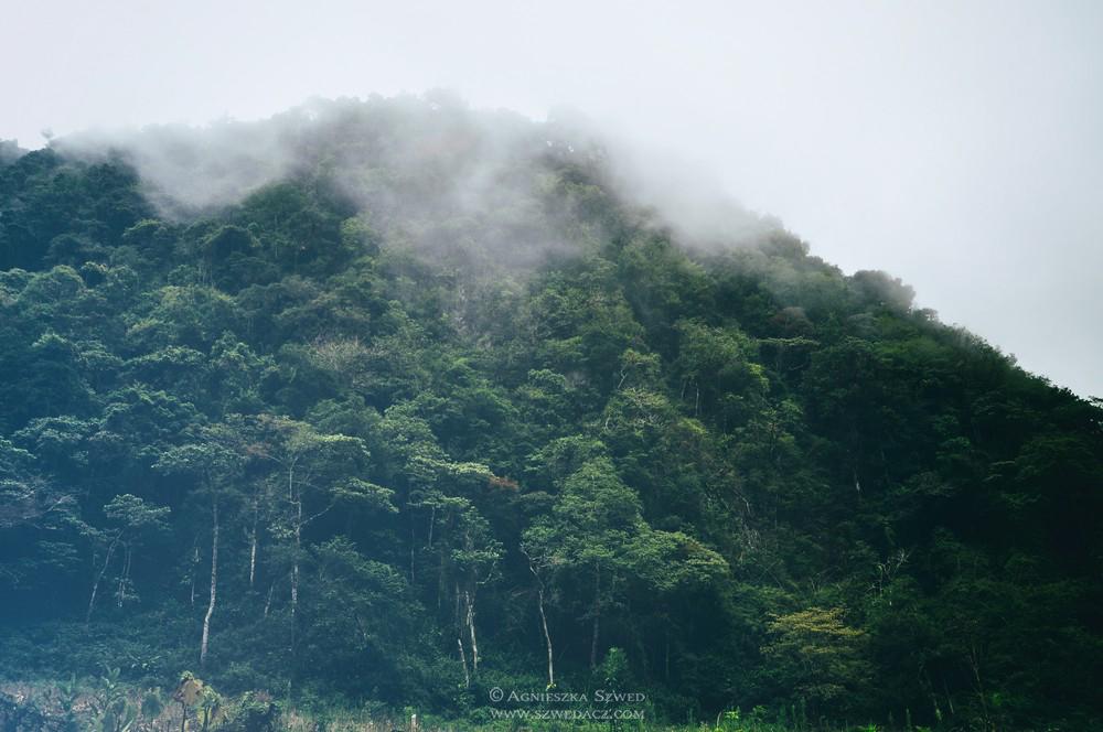 Panama duszna i zielona – w tropikalnym lesie