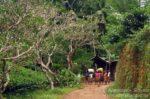 mieszkańcy lasu deszczowego