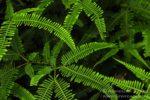 Kottawa Forest Reserve las deszczowy na Sri Lance