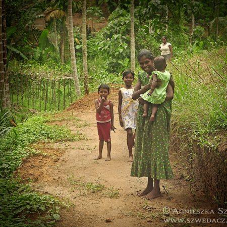 Sri Lanka, las deszczowy