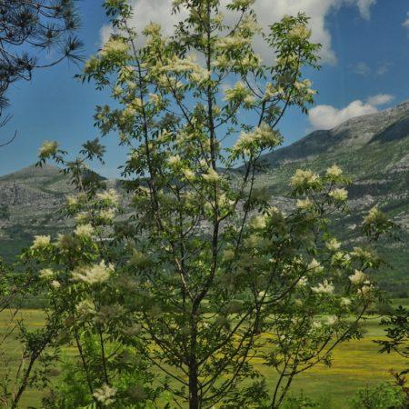 Czarnogóra, przyroda