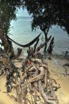 plaże i drzewa Ko Pha Ngan
