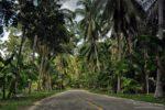 palmy, Ko Pha Ngan