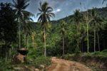 dżungla, Ko Pha Ngan