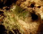 Rumunia: Jaskinia Niedźwiedzia