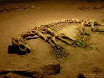 Rumunia: Jaskinia Niedźwiedzia, szkielet