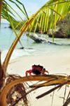 Kraby na Isla Iguana, Iguana Island