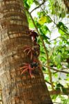 Kraby na Isla Iguana