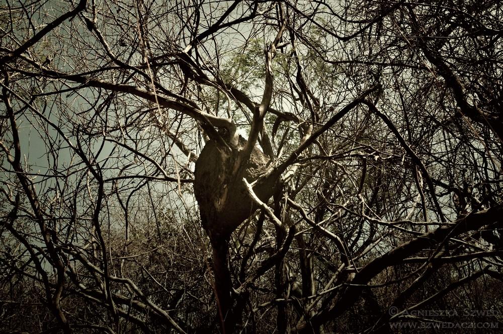 Sarigua NP – w suchym lesie deszczowym