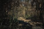 Suchy las deszczowy Sarigua