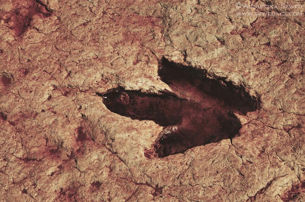 Tuba City Dinosaur Tracks – śladem amerykańskich dinozaurów