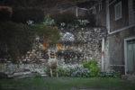 Podwórko w Ribeira Grande