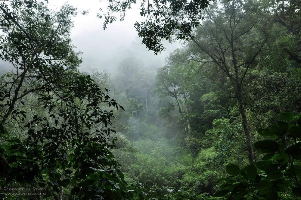 szwed-panama-lasy-deszczowe19