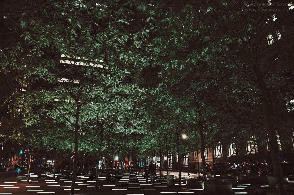 Drzewa w Nowym Jorku