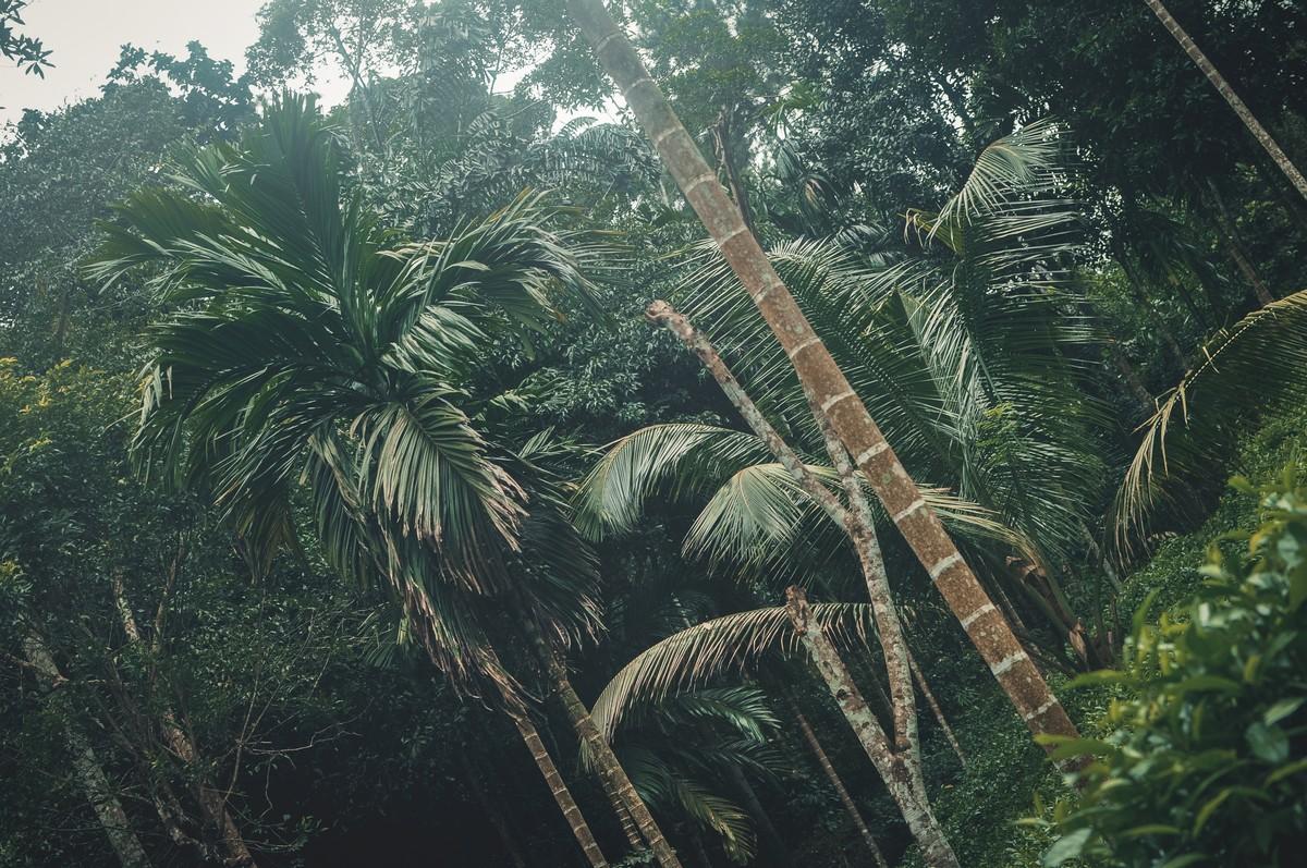 Kottawa Forest Reserve - Sri Lanka