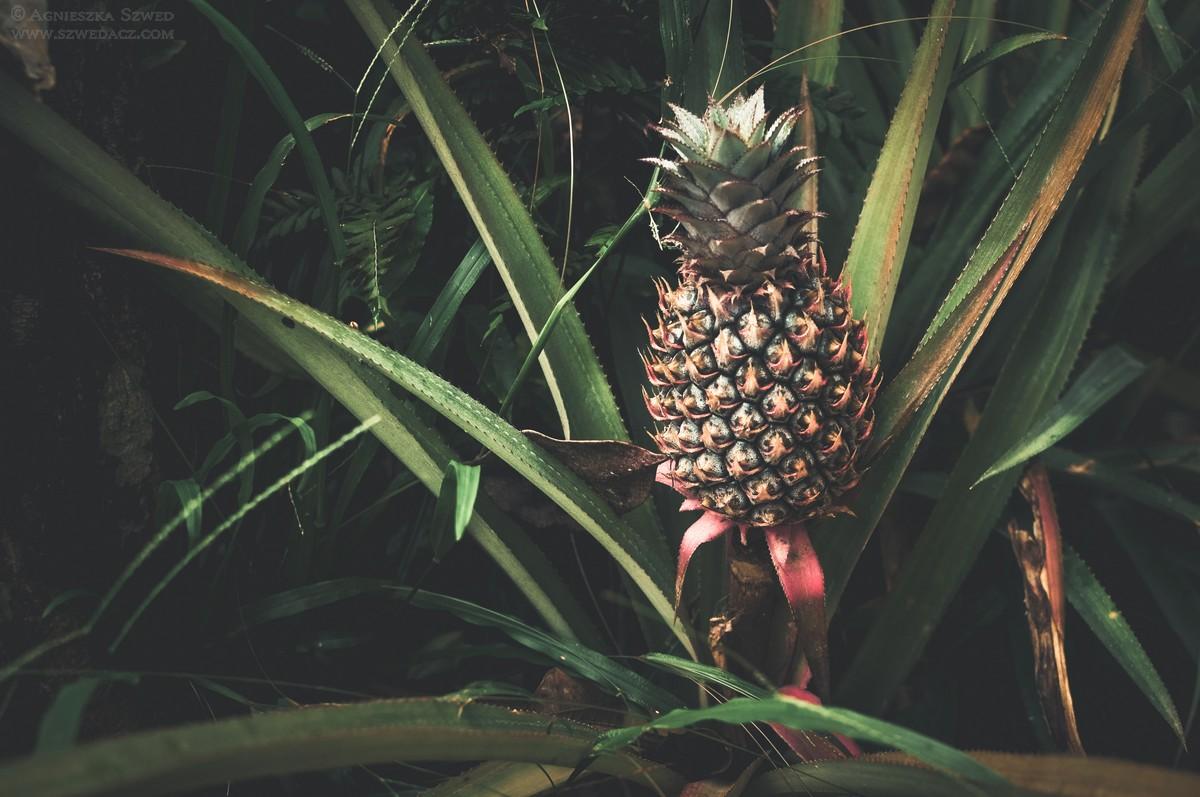 Kottawa Forest Reserve – 1:0 dla pijawek