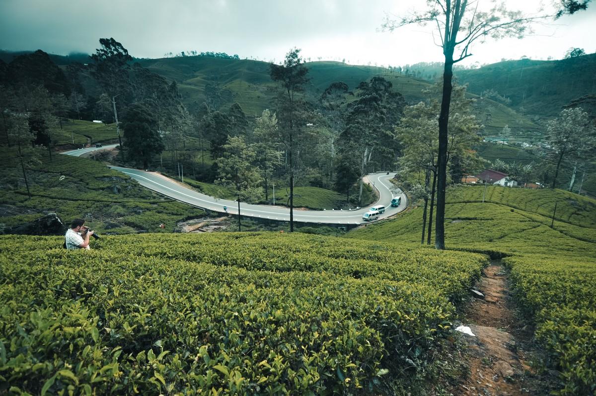Plantacja herbaty Mackwoods Labokellie na Sri Lance