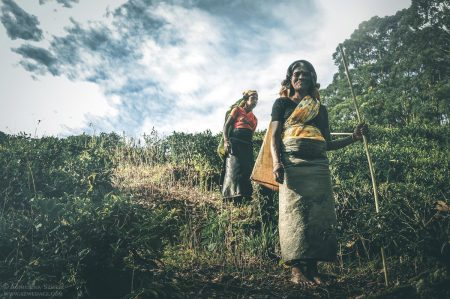 Herbata na Sri Lance. Pociągiem przez Hill Country.