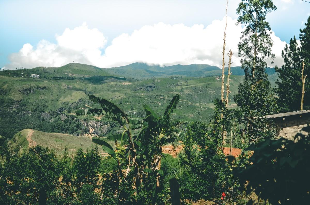 Hill Country - Sri Lanka